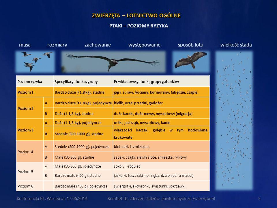 Komitet ds. zderzeń statków powietrznych ze zwierzętami