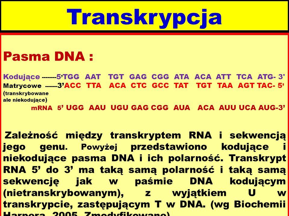 Transkrypcja Pasma DNA :