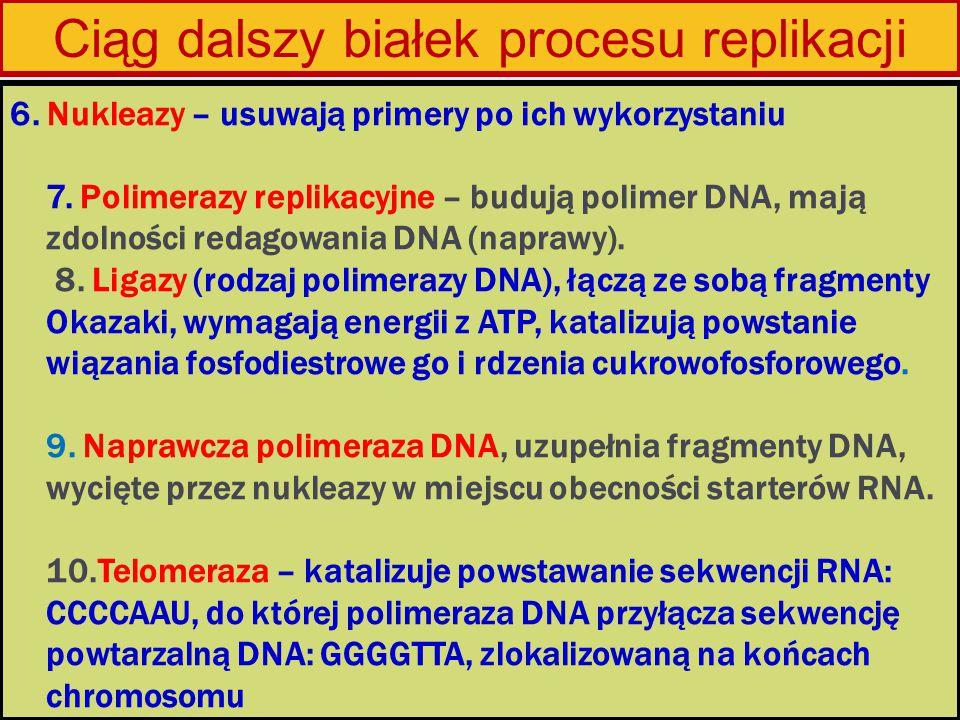 Ciąg dalszy białek procesu replikacji