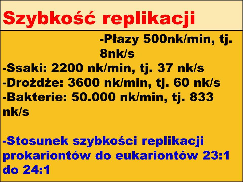 Szybkość replikacji -Płazy 500nk/min, tj. 8nk/s