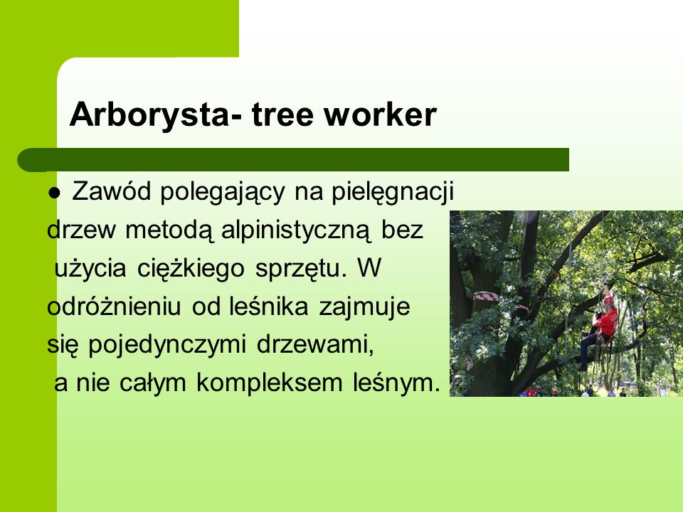 Arborysta- tree worker