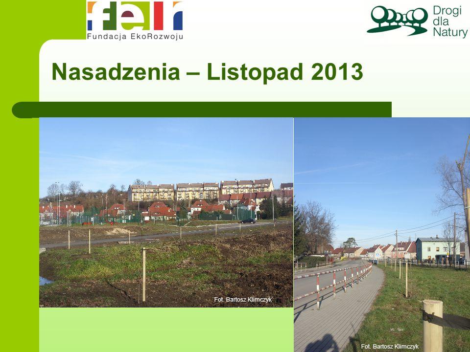 Nasadzenia – Listopad 2013 Wniosek: tylko w partnerstwie drogowcami możemy uratować aleje. Fot. Bartosz Klimczyk.