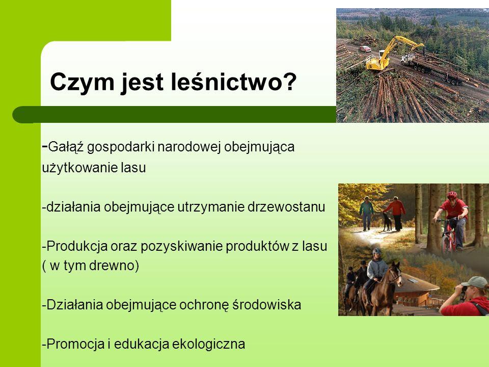 Czym jest leśnictwo -Gałąź gospodarki narodowej obejmująca