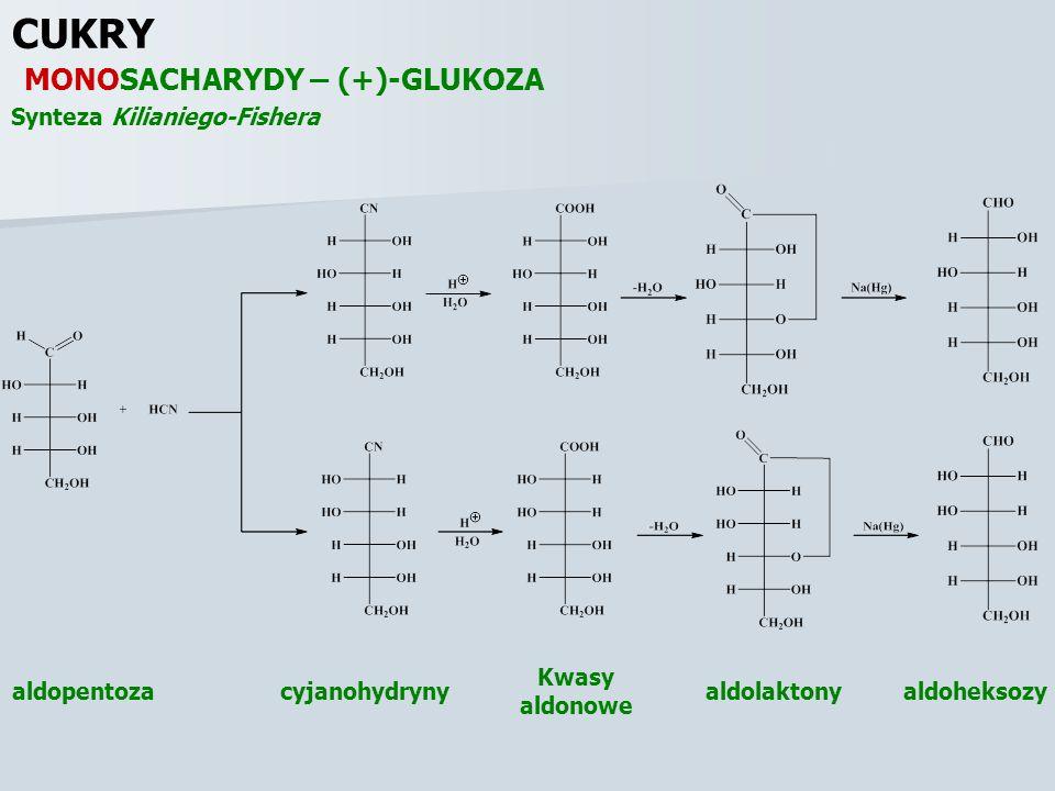 CUKRY MONOSACHARYDY – (+)-GLUKOZA Synteza Kilianiego-Fishera