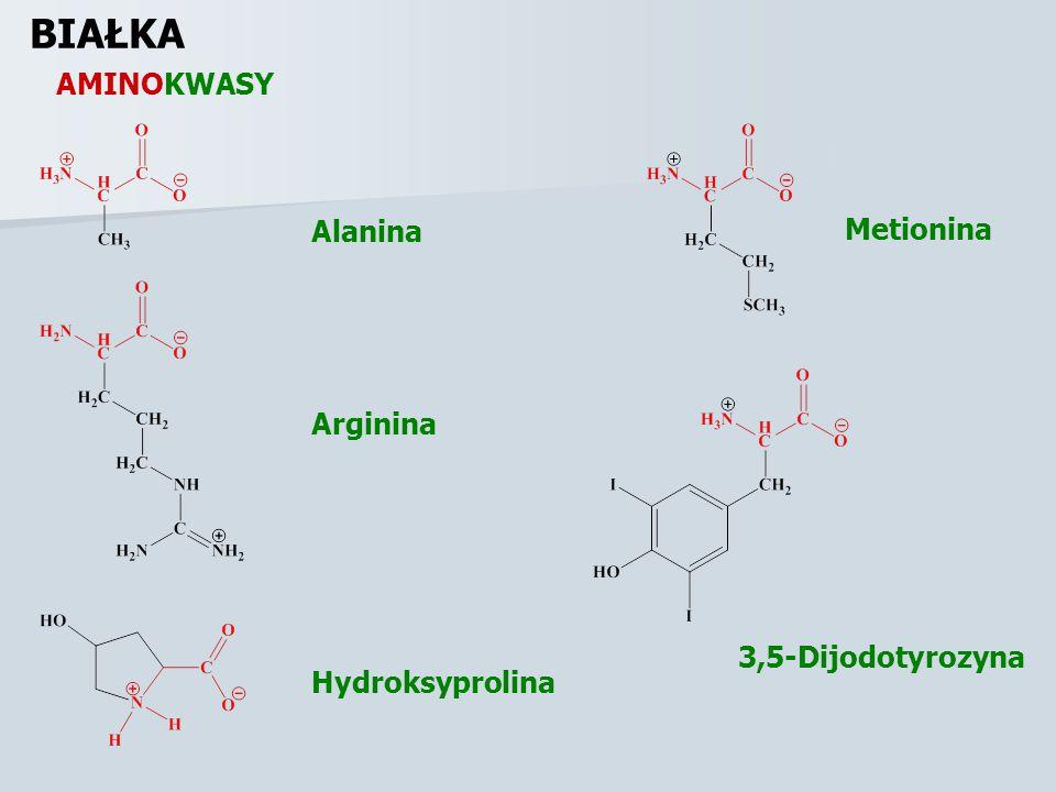 BIAŁKA AMINOKWASY Alanina Metionina Arginina 3,5-Dijodotyrozyna