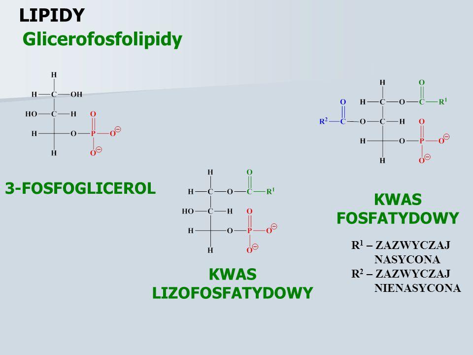 LIPIDY Glicerofosfolipidy 3-FOSFOGLICEROL KWAS FOSFATYDOWY KWAS