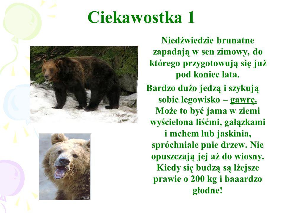 Ciekawostka 1 Niedźwiedzie brunatne zapadają w sen zimowy, do którego przygotowują się już pod koniec lata.