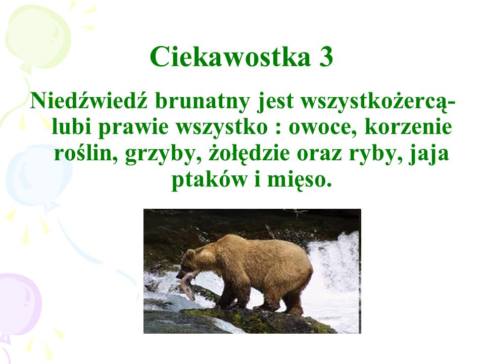 Ciekawostka 3 Niedźwiedź brunatny jest wszystkożercą- lubi prawie wszystko : owoce, korzenie roślin, grzyby, żołędzie oraz ryby, jaja ptaków i mięso.