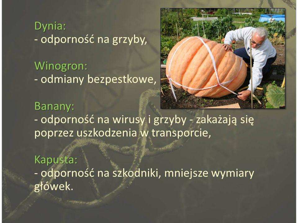 Dynia: - odporność na grzyby, Winogron: - odmiany bezpestkowe, Banany: - odporność na wirusy i grzyby - zakażają się poprzez uszkodzenia w transporcie, Kapusta: - odporność na szkodniki, mniejsze wymiary główek.