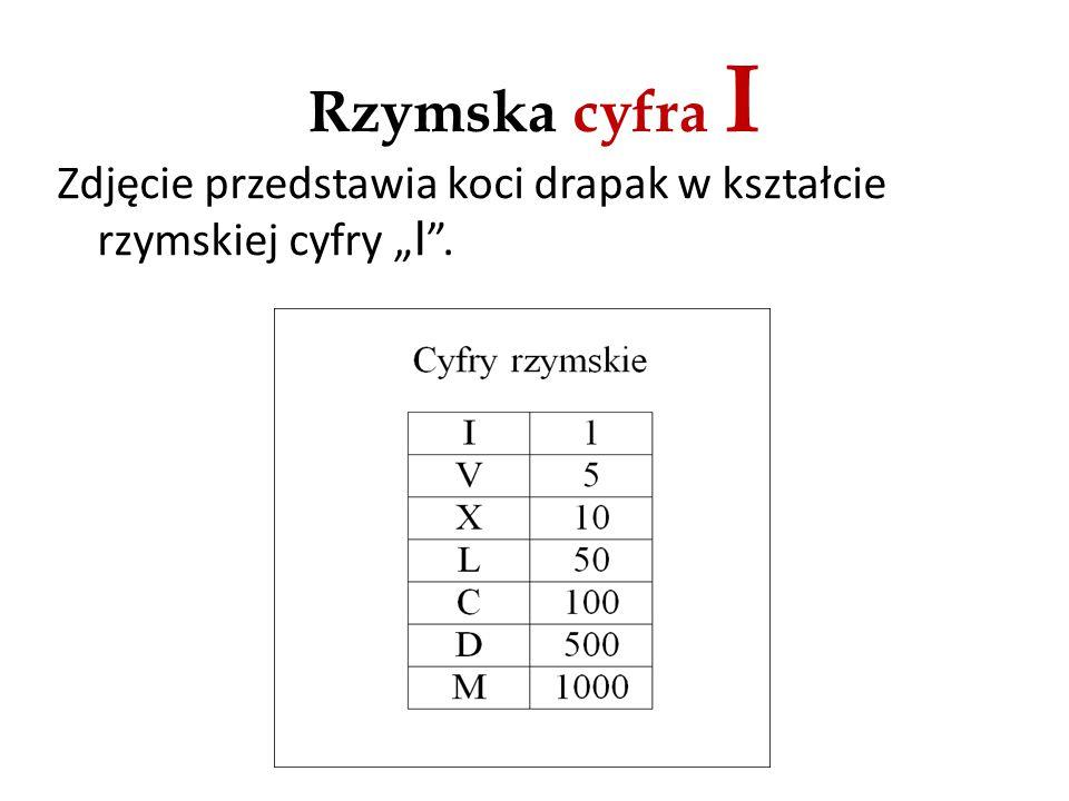 """Rzymska cyfra I Zdjęcie przedstawia koci drapak w kształcie rzymskiej cyfry """"I ."""