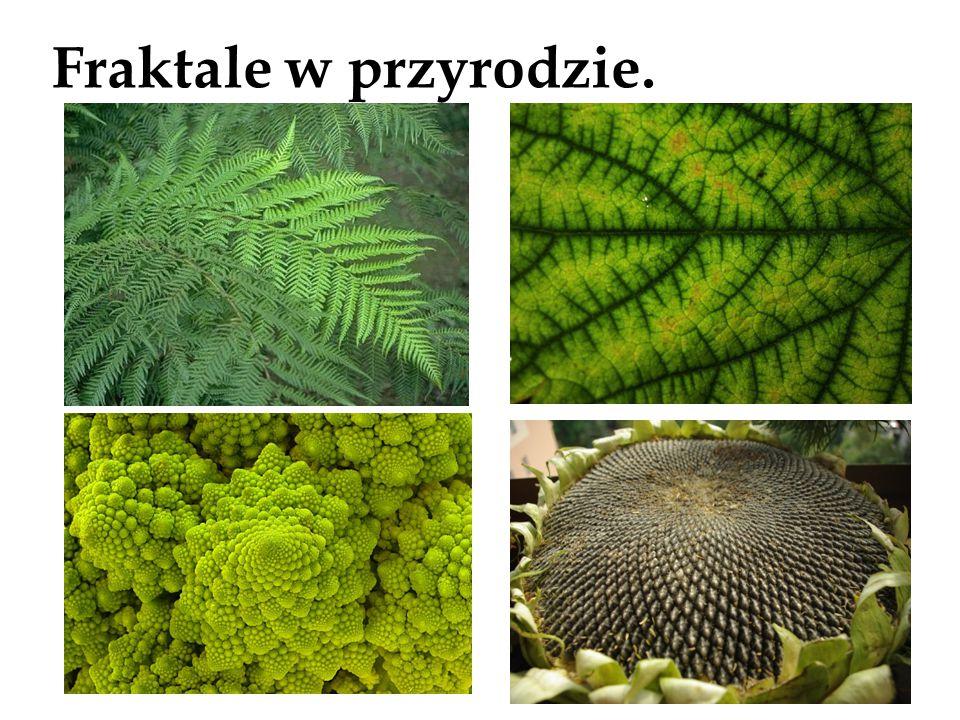 Fraktale w przyrodzie.
