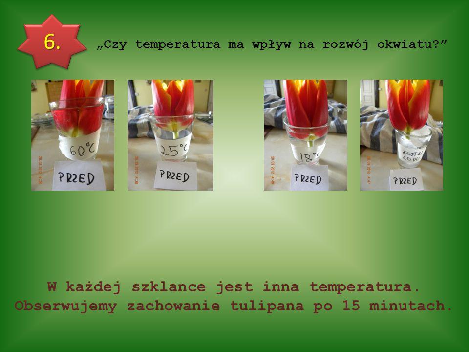 """""""Czy temperatura ma wpływ na rozwój okwiatu"""
