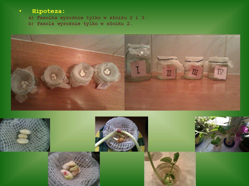 Hipoteza: a) Fasolka wyrośnie tylko w słoiku 2 i 3