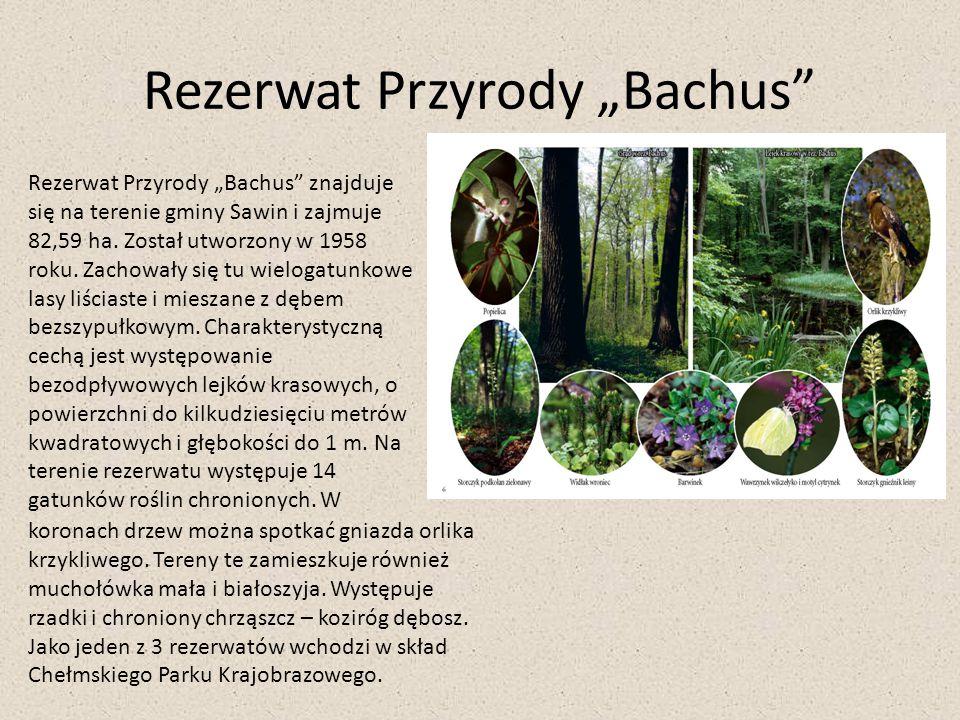 """Rezerwat Przyrody """"Bachus"""