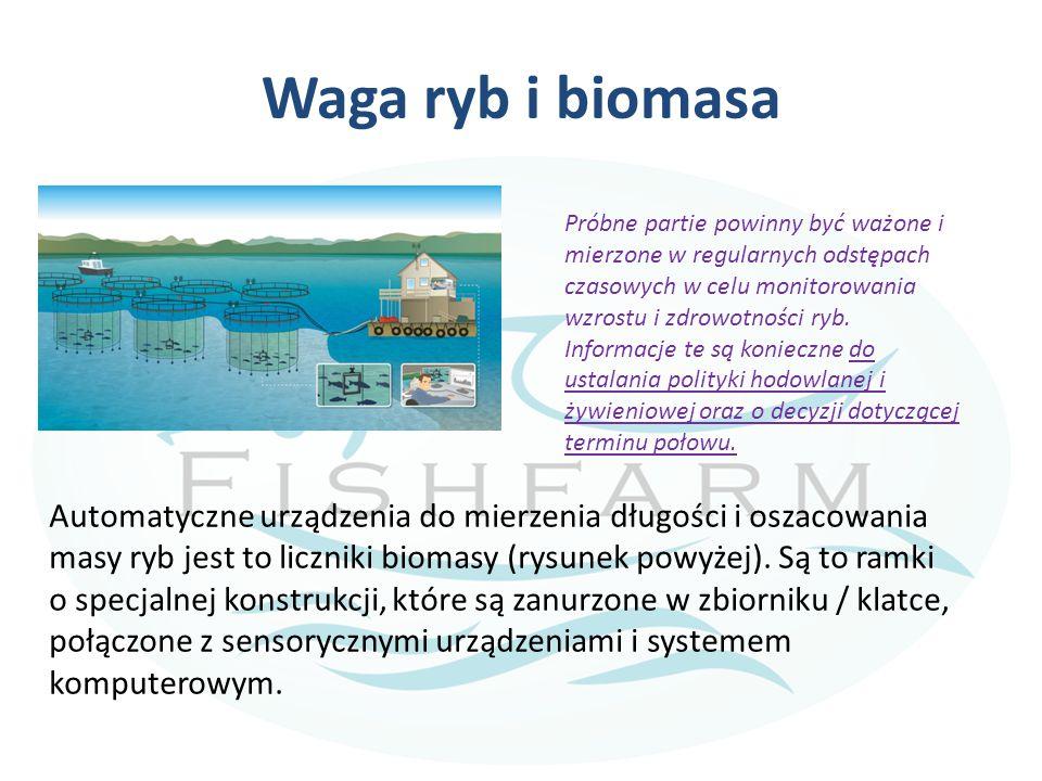 Waga ryb i biomasa