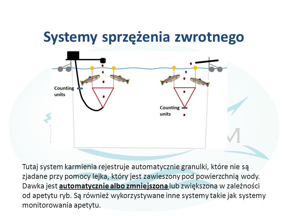 Systemy sprzężenia zwrotnego