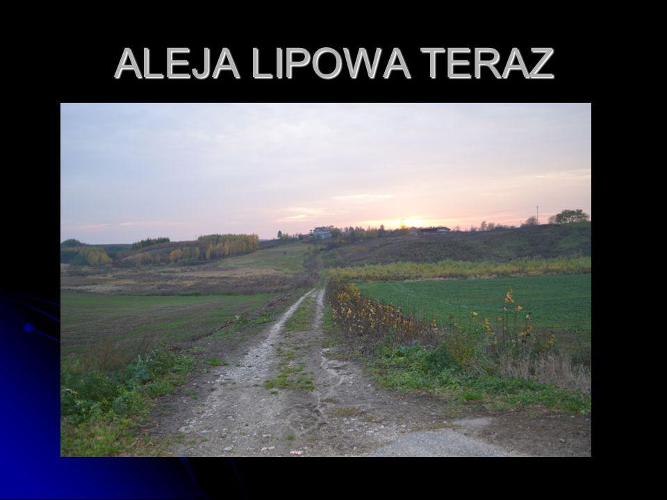 ALEJA LIPOWA TERAZ