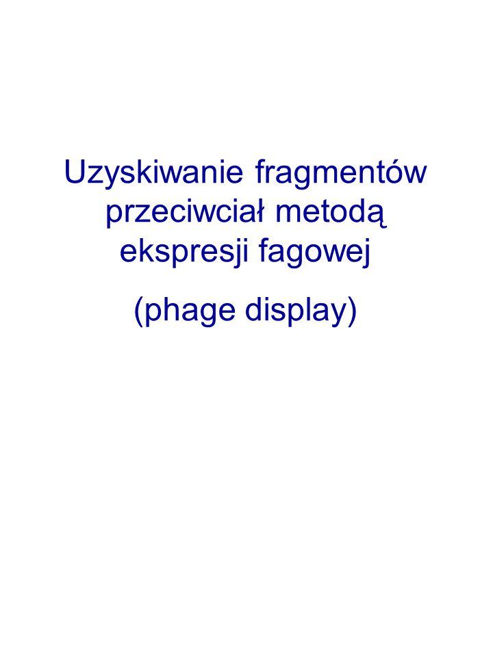 Uzyskiwanie fragmentów przeciwciał metodą ekspresji fagowej