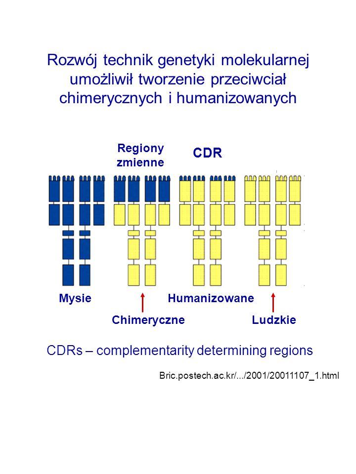 CDRs – complementarity determining regions