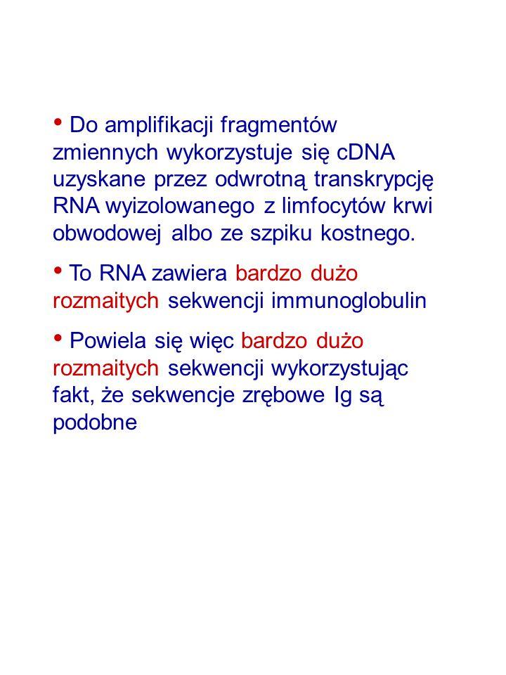 Do amplifikacji fragmentów zmiennych wykorzystuje się cDNA uzyskane przez odwrotną transkrypcję RNA wyizolowanego z limfocytów krwi obwodowej albo ze szpiku kostnego.