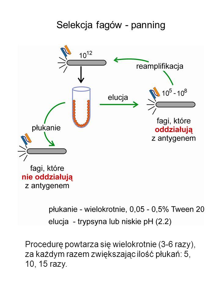 Selekcja fagów - panning