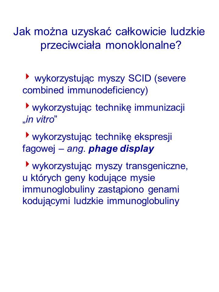 Jak można uzyskać całkowicie ludzkie przeciwciała monoklonalne