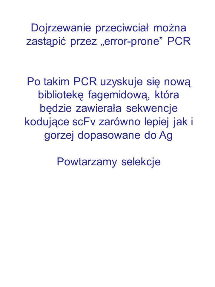 """Dojrzewanie przeciwciał można zastąpić przez """"error-prone PCR"""
