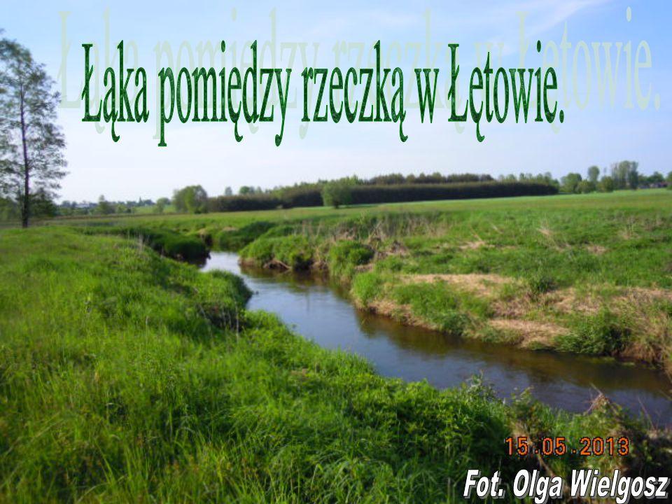 Łąka pomiędzy rzeczką w Łętowie.