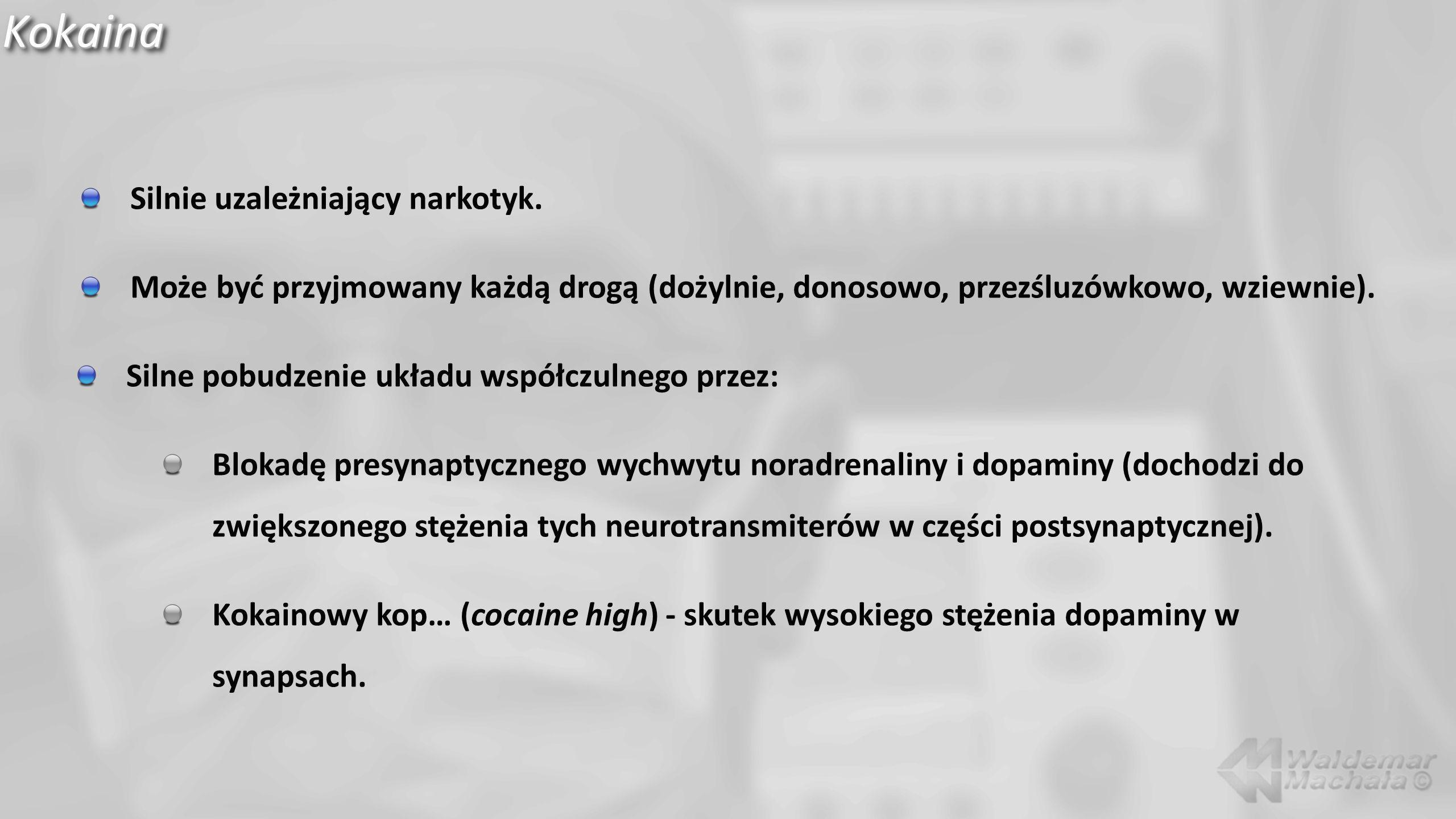 Kokaina Silnie uzależniający narkotyk.
