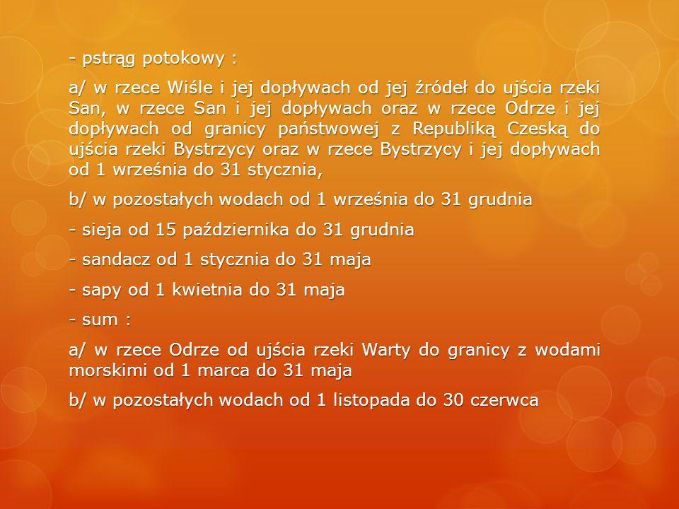 - pstrąg potokowy : a/ w rzece Wiśle i jej dopływach od jej źródeł do ujścia rzeki San, w rzece San i jej dopływach oraz w rzece Odrze i jej dopływach od granicy państwowej z Republiką Czeską do ujścia rzeki Bystrzycy oraz w rzece Bystrzycy i jej dopływach od 1 września do 31 stycznia, b/ w pozostałych wodach od 1 września do 31 grudnia - sieja od 15 października do 31 grudnia - sandacz od 1 stycznia do 31 maja - sapy od 1 kwietnia do 31 maja - sum : a/ w rzece Odrze od ujścia rzeki Warty do granicy z wodami morskimi od 1 marca do 31 maja b/ w pozostałych wodach od 1 listopada do 30 czerwca