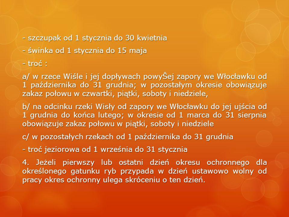 - szczupak od 1 stycznia do 30 kwietnia - świnka od 1 stycznia do 15 maja - troć : a/ w rzece Wiśle i jej dopływach powyŜej zapory we Włocławku od 1 października do 31 grudnia; w pozostałym okresie obowiązuje zakaz połowu w czwartki, piątki, soboty i niedziele, b/ na odcinku rzeki Wisły od zapory we Włocławku do jej ujścia od 1 grudnia do końca lutego; w okresie od 1 marca do 31 sierpnia obowiązuje zakaz połowu w piątki, soboty i niedziele c/ w pozostałych rzekach od 1 października do 31 grudnia - troć jeziorowa od 1 września do 31 stycznia 4.