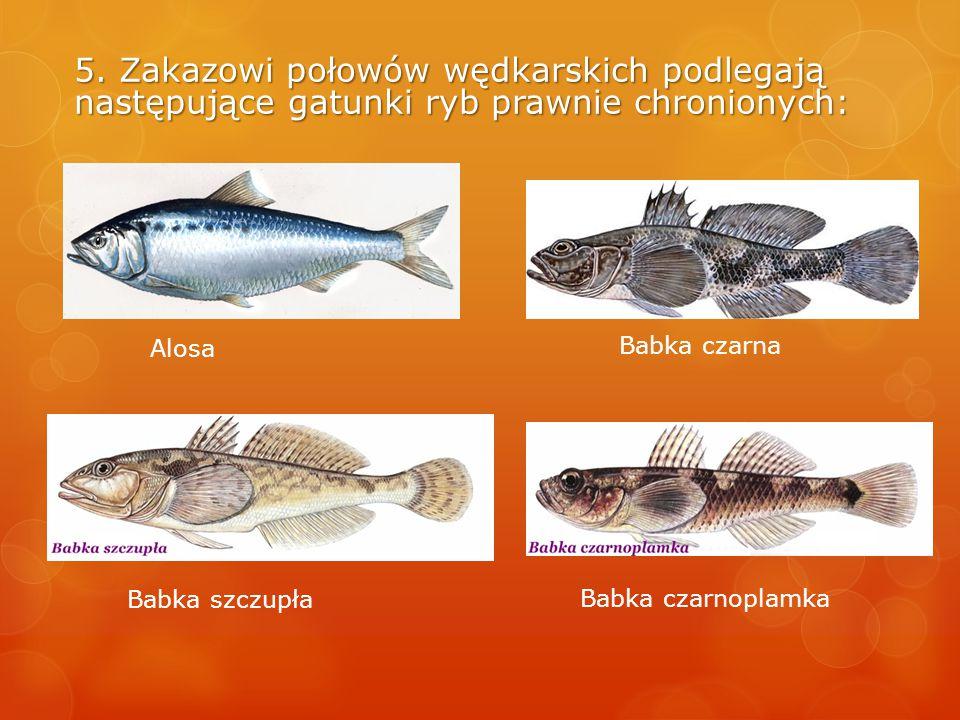 5. Zakazowi połowów wędkarskich podlegają następujące gatunki ryb prawnie chronionych: