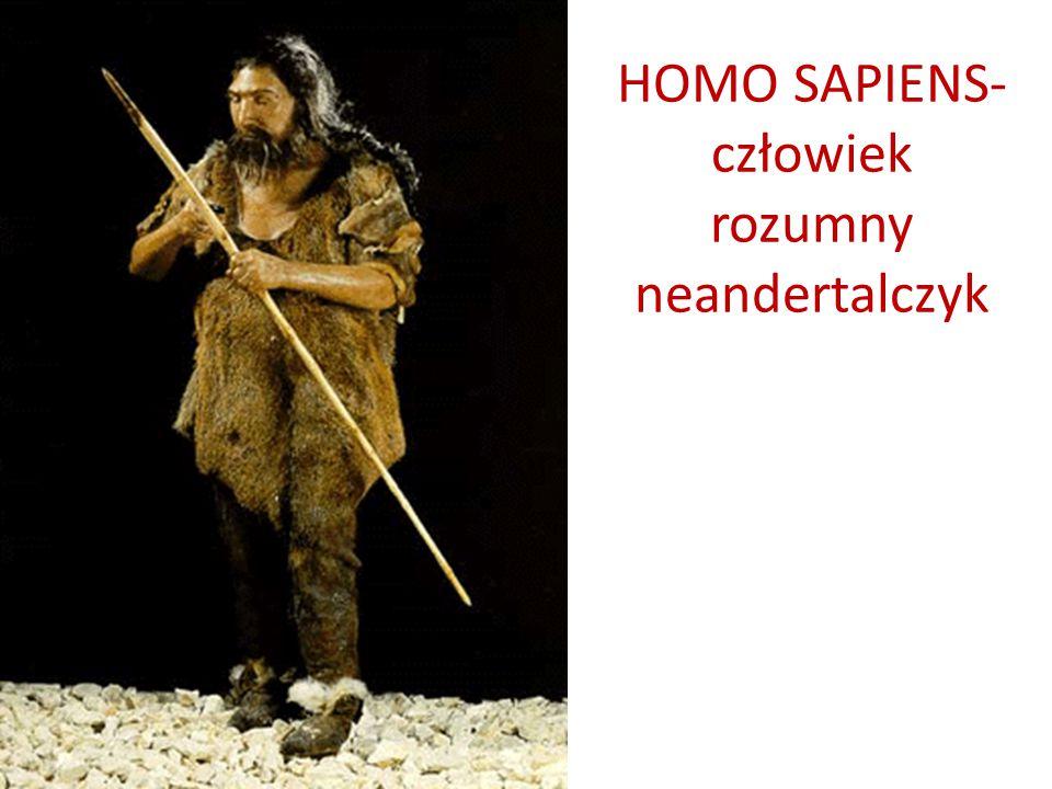 HOMO SAPIENS- człowiek rozumny neandertalczyk