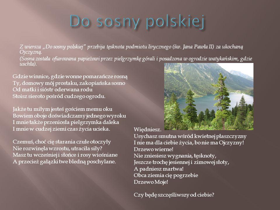 """Do sosny polskiej Z wiersza """"Do sosny polskiej przebija tęsknota podmiotu lirycznego (św. Jana Pawła II) za ukochaną Ojczyzną."""