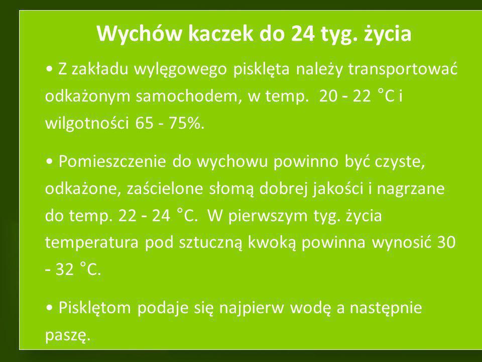 Wychów kaczek do 24 tyg. życia
