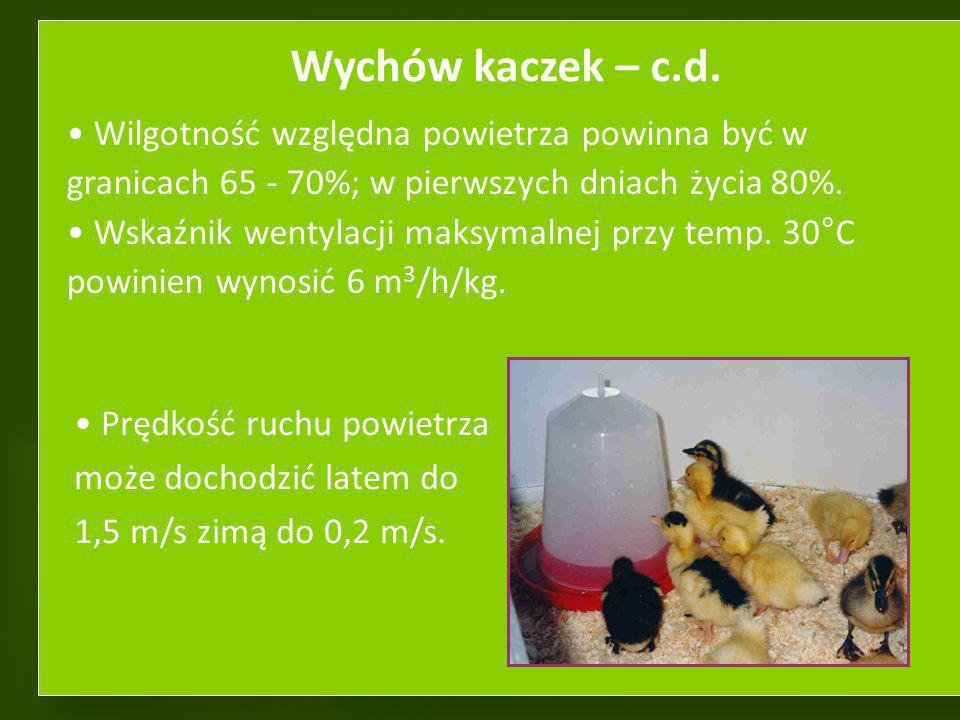 Wychów kaczek – c.d. Wilgotność względna powietrza powinna być w granicach 65 - 70%; w pierwszych dniach życia 80%.