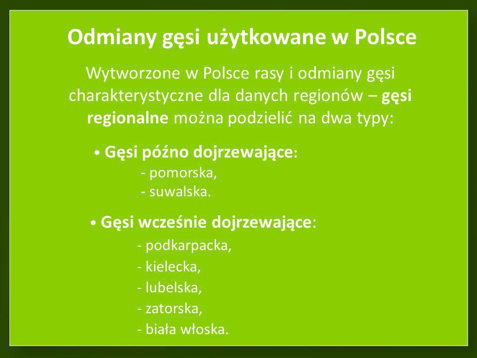 Odmiany gęsi użytkowane w Polsce
