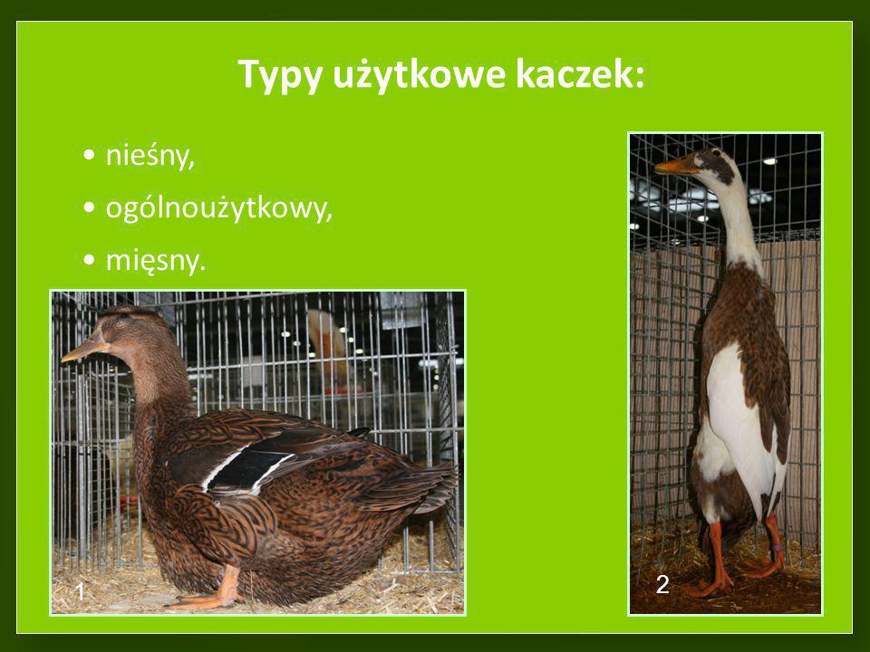 Typy użytkowe kaczek: nieśny, ogólnoużytkowy, mięsny. 2 1