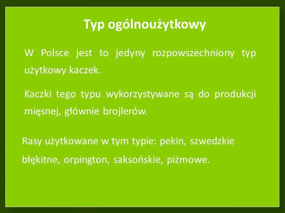 Typ ogólnoużytkowy W Polsce jest to jedyny rozpowszechniony typ użytkowy kaczek.