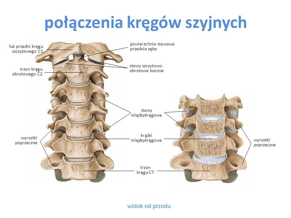 połączenia kręgów szyjnych