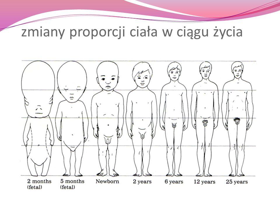 zmiany proporcji ciała w ciągu życia