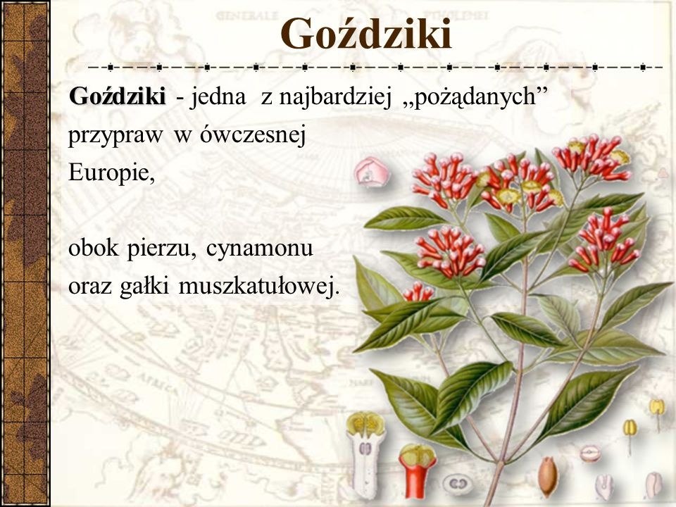 """Goździki Goździki - jedna z najbardziej """"pożądanych przypraw w ówczesnej Europie, obok pierzu, cynamonu oraz gałki muszkatułowej."""