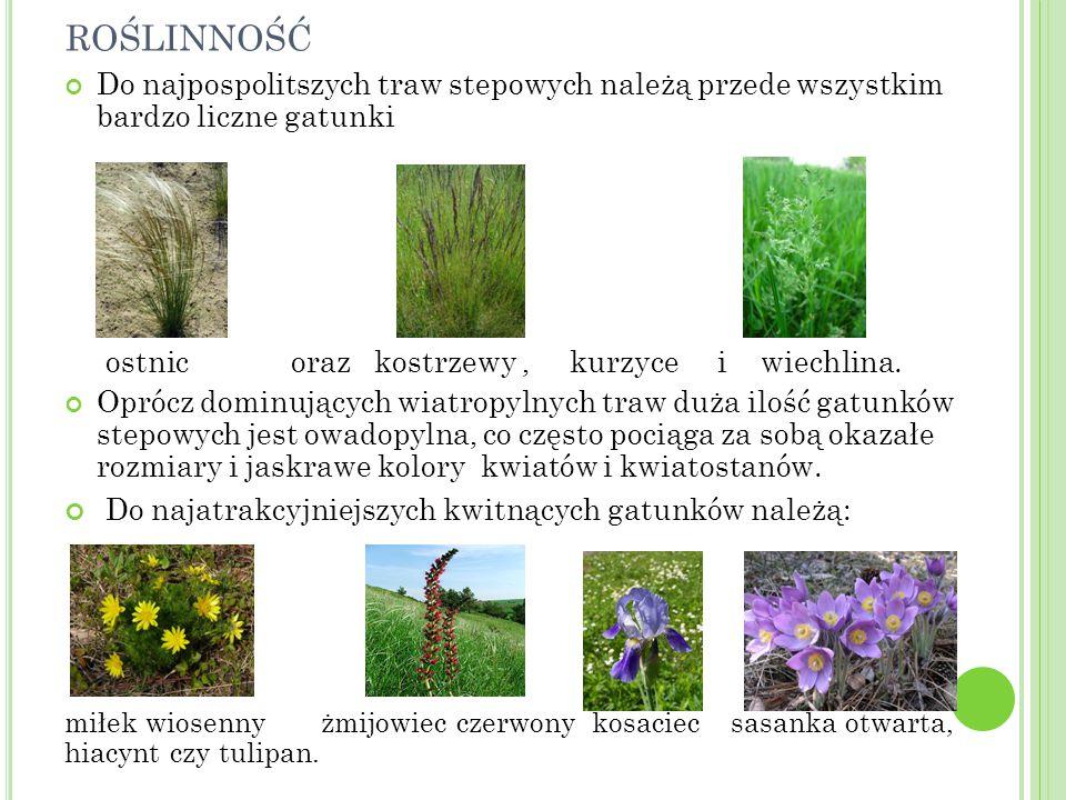 roślinność Do najatrakcyjniejszych kwitnących gatunków należą: