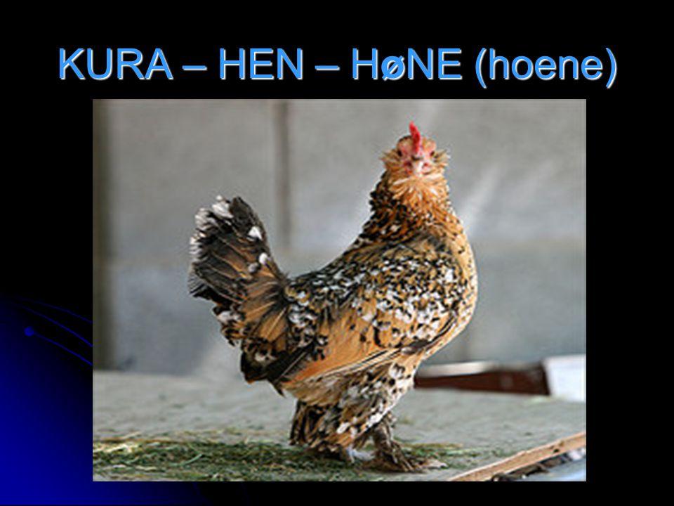 KURA – HEN – HøNE (hoene)