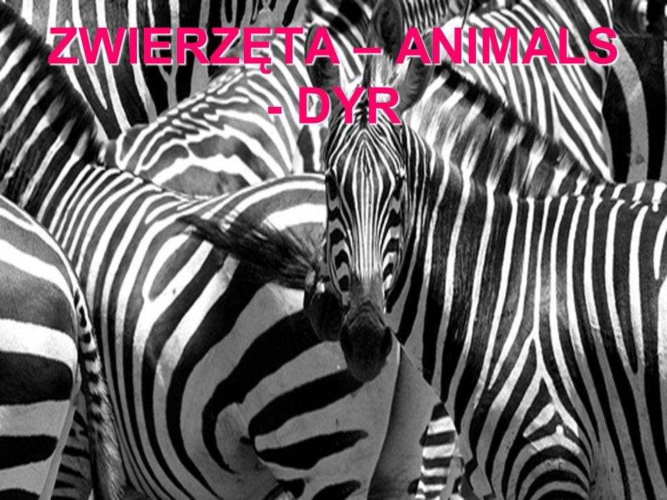 ZWIERZĘTA – ANIMALS - DYR