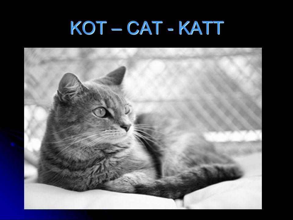 KOT – CAT - KATT