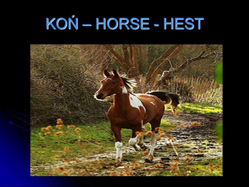 KOŃ – HORSE - HEST