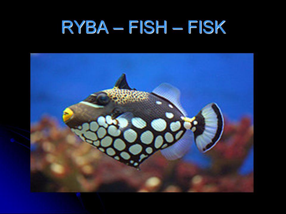 RYBA – FISH – FISK