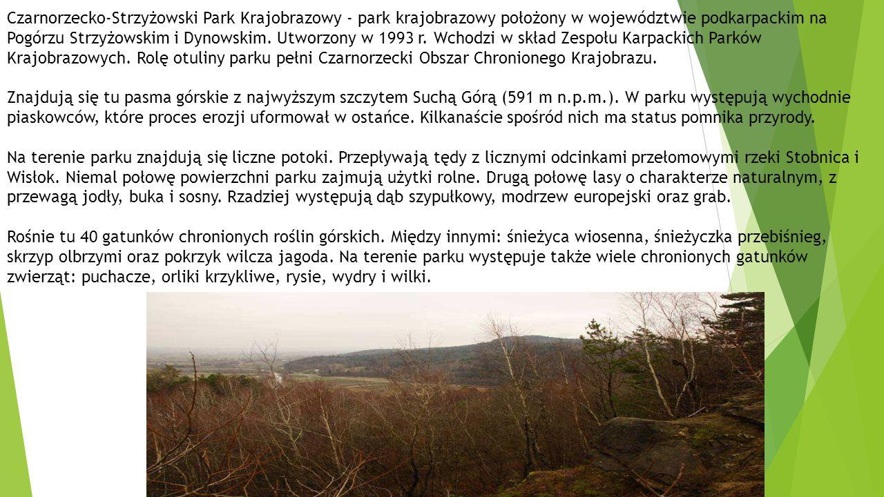 Czarnorzecko-Strzyżowski Park Krajobrazowy - park krajobrazowy położony w województwie podkarpackim na Pogórzu Strzyżowskim i Dynowskim. Utworzony w 1993 r. Wchodzi w skład Zespołu Karpackich Parków Krajobrazowych. Rolę otuliny parku pełni Czarnorzecki Obszar Chronionego Krajobrazu.