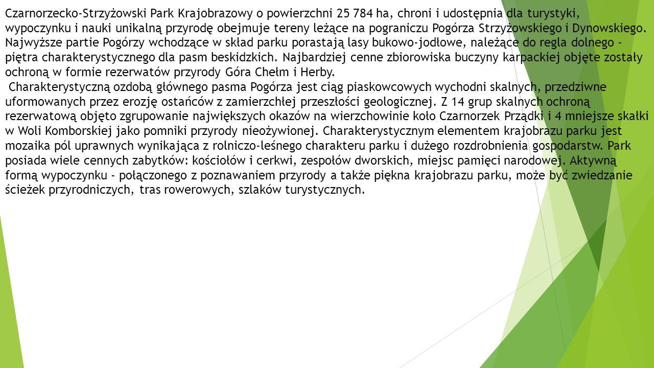 Czarnorzecko-Strzyżowski Park Krajobrazowy o powierzchni 25 784 ha, chroni i udostępnia dla turystyki, wypoczynku i nauki unikalną przyrodę obejmuje tereny leżące na pograniczu Pogórza Strzyżowskiego i Dynowskiego. Najwyższe partie Pogórzy wchodzące w skład parku porastają lasy bukowo-jodłowe, należące do regla dolnego - piętra charakterystycznego dla pasm beskidzkich. Najbardziej cenne zbiorowiska buczyny karpackiej objęte zostały ochroną w formie rezerwatów przyrody Góra Chełm i Herby.